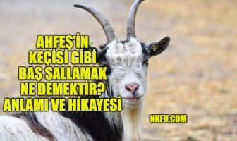 Ahfeş'in keçisi