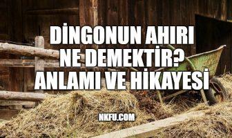 Dingonun Ahırı