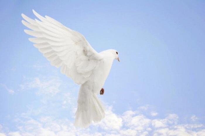 Uluslararası Barış Günü