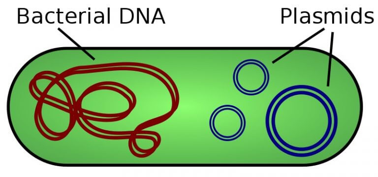 Dairesel DNA