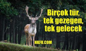Hayvan Sloganları