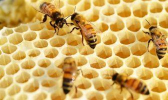 petek arı