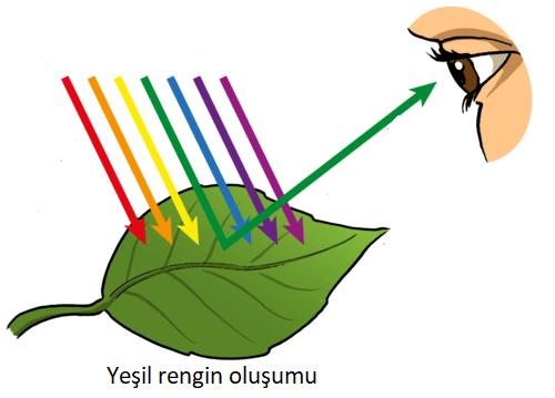 renk oluşumu