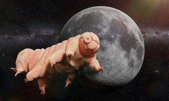 tardigrad uzay