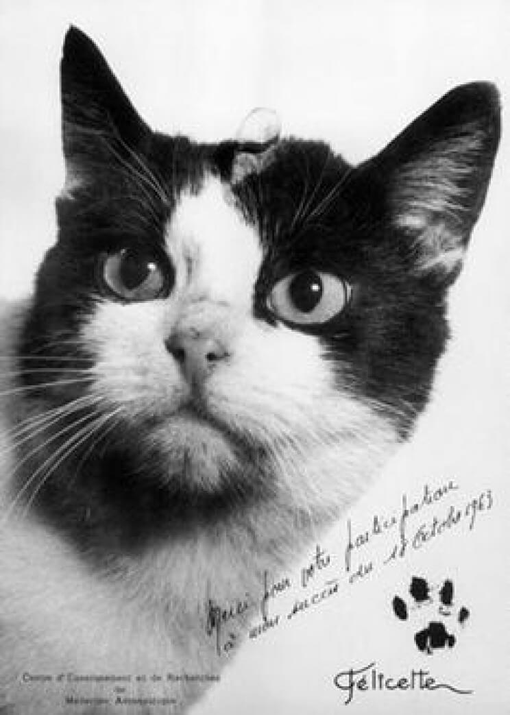 uzay kedi