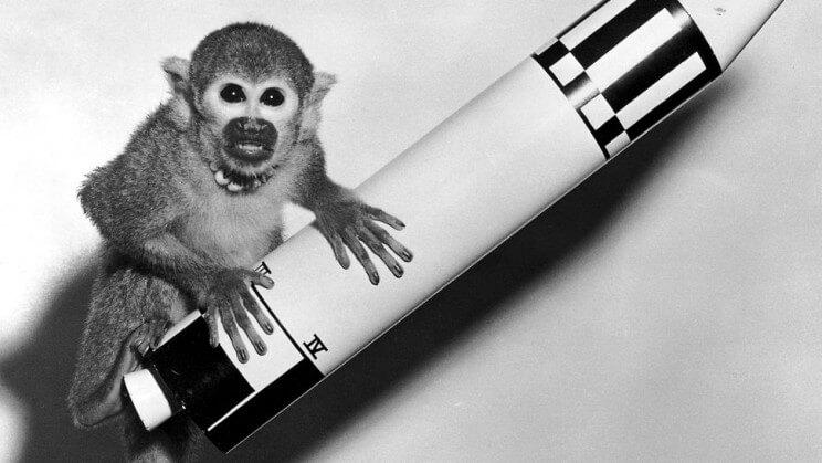 uzay maymun