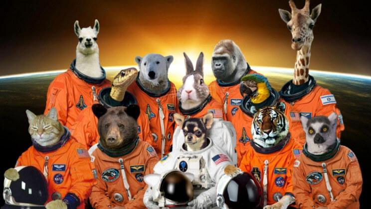 uzayda hayvanlar