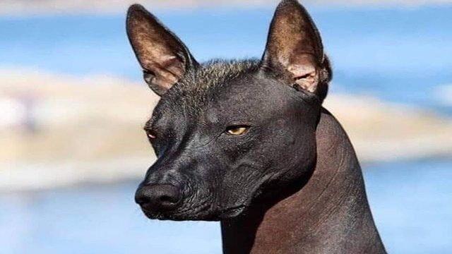 Köpek Yavrusu Sahiplenen Ailenin Başına Gelen Sıradışı Olay