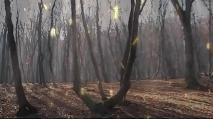 Hoia Baciu ormanı