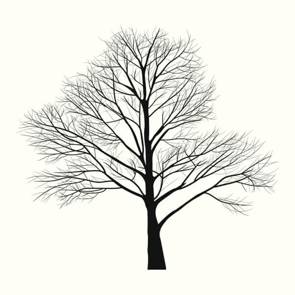 altın oran ağaç