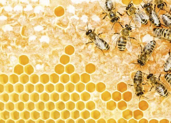 altın oran arı