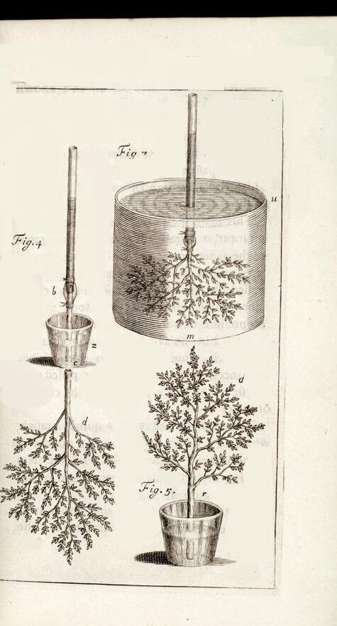 bitki özsu deneyi