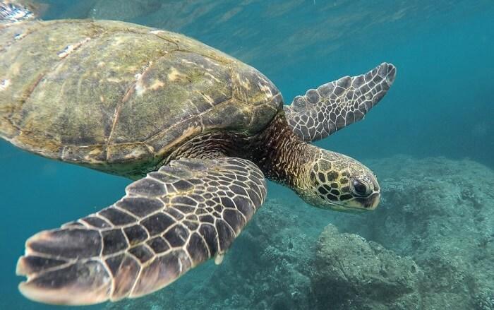 deniz kaplumbağası