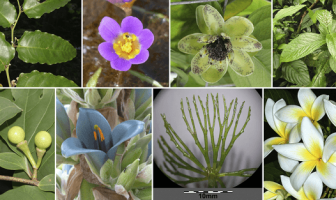 Kapalı tohumlu bitkiler