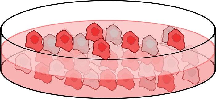 Hücre Kültürü